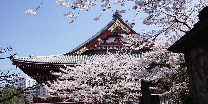 Templo de Asakusa Kannon